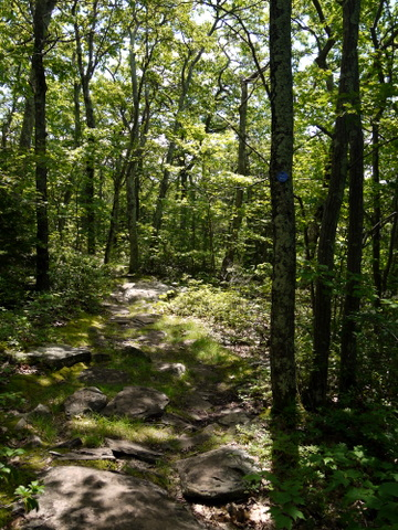 Footpath on Escarpment Trail, Kaaterskill Wild Forest, Greene County, New York