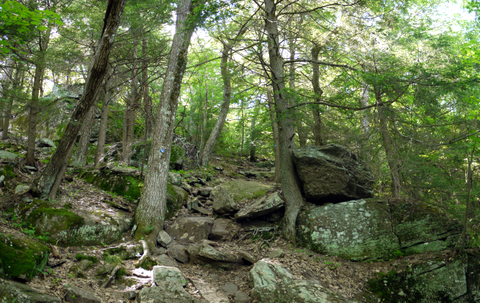 Rocks and trees of the Escarpment Trail, Kaaterskill Wild Forest, Greene County, New York