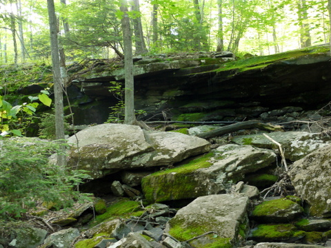 Moss-covered rocks, Kaaterskill Wild Forest, Greene County, New York