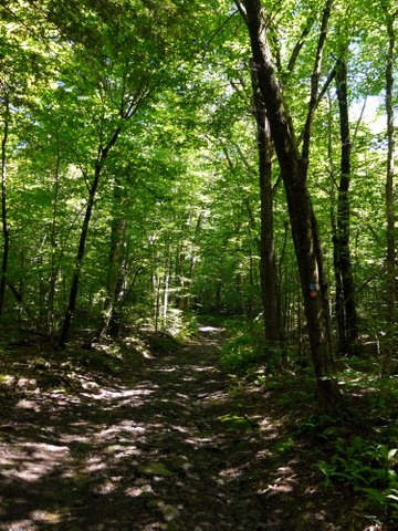 Long Path, Kaaterskill Wild Forest, Greene County, New York