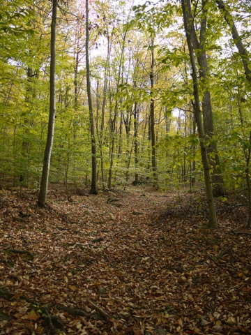 Leaf-covered trail, Ringwood State Park, Passaic County, New Jersey