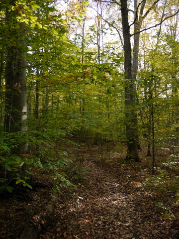 Greenery in the Fall, Ringwood State Park, Passaic County, New Jersey