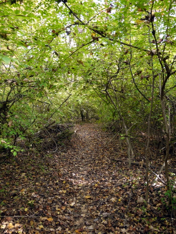 Tree tunnel, Ringwood State Park, Passaic County, New Jersey