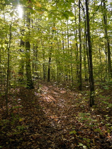 Cooper Union trail, Ringwood State Park, Passaic County, New Jersey