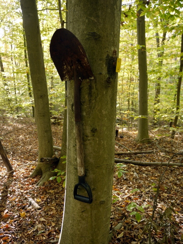 Shovel nailed to tree, Ringwood State Park, Passaic County, New Jersey
