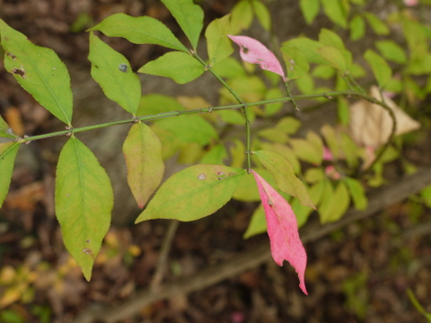 Leaves changing color, Ringwood State Park, Passaic County, New Jersey