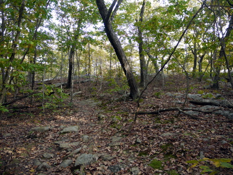 Yellow trail, Ringwood State Park, Passaic County, New Jersey