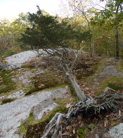 Rock outcropping, Ringwood State Park, Passaic County, New Jersey