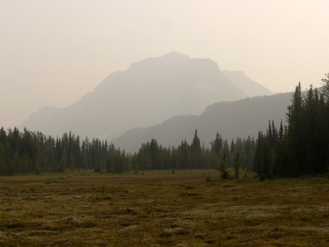 Meadow on Simpson Pass Trail, Banff National Park, Alberta, Canada