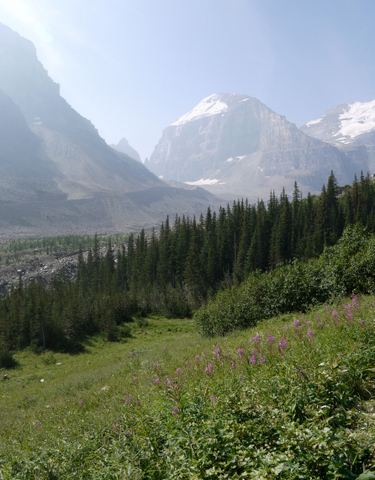 Wildflowers and Mount Lefroy, Banff National Park, Alberta, Canada